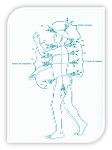 cuerpo energético Kinesiología Integral